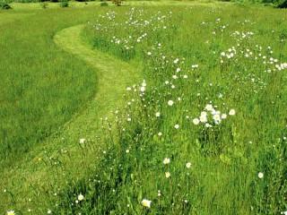 Дикий газон - бесплатная эстетика