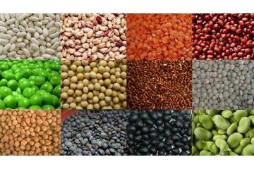 Дражированные семена и их особенности