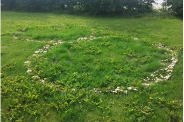 Как создать грибной газон