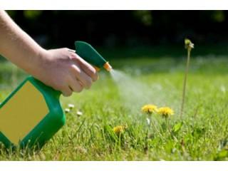 Транслокальные гербициды для газона